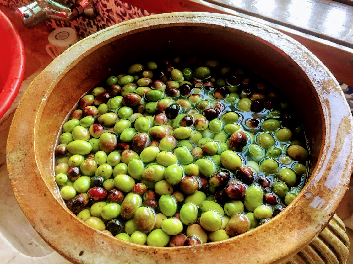 Olive Picking Experience